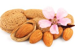 blossoming almonds