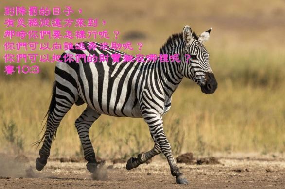 AA_0063 賽10章3.jpg